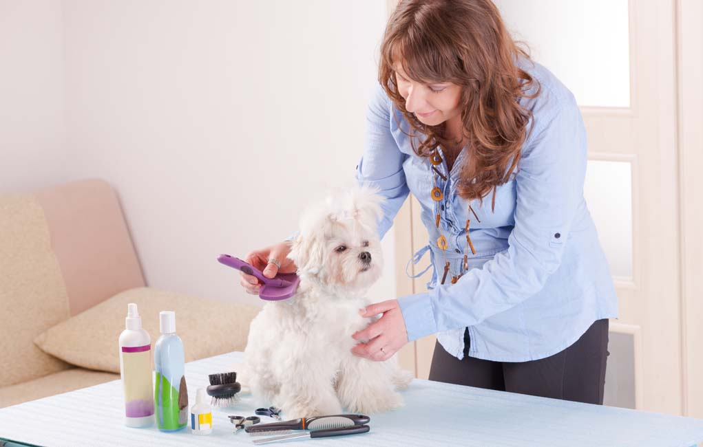 abc dog grooming school reviews