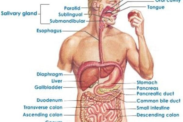 coffee and gastrointestinal function facts and fiction a review