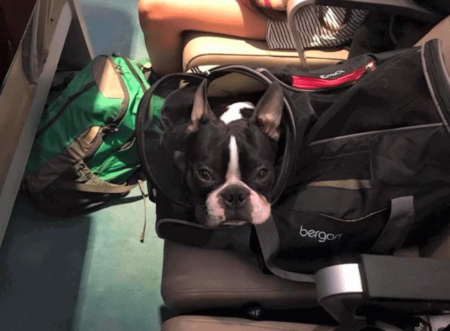 alaska airlines pet travel reviews