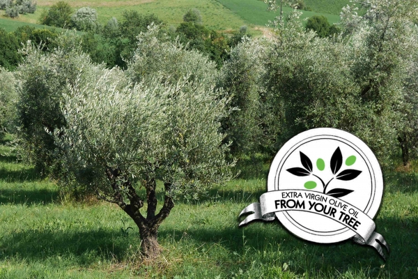 adopt an olive tree reviews