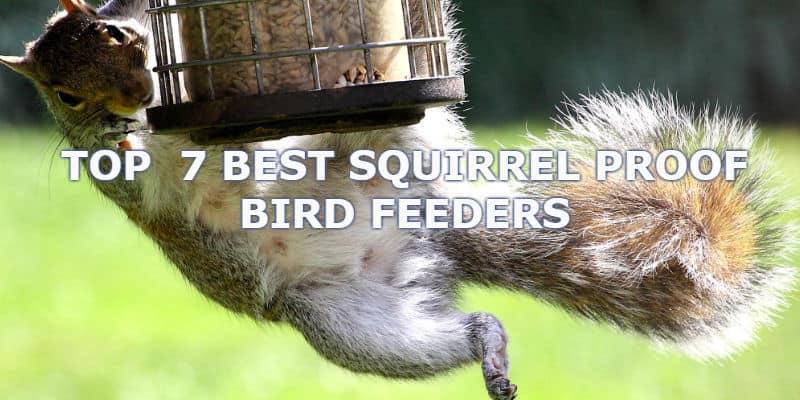 best squirrel proof bird feeder reviews
