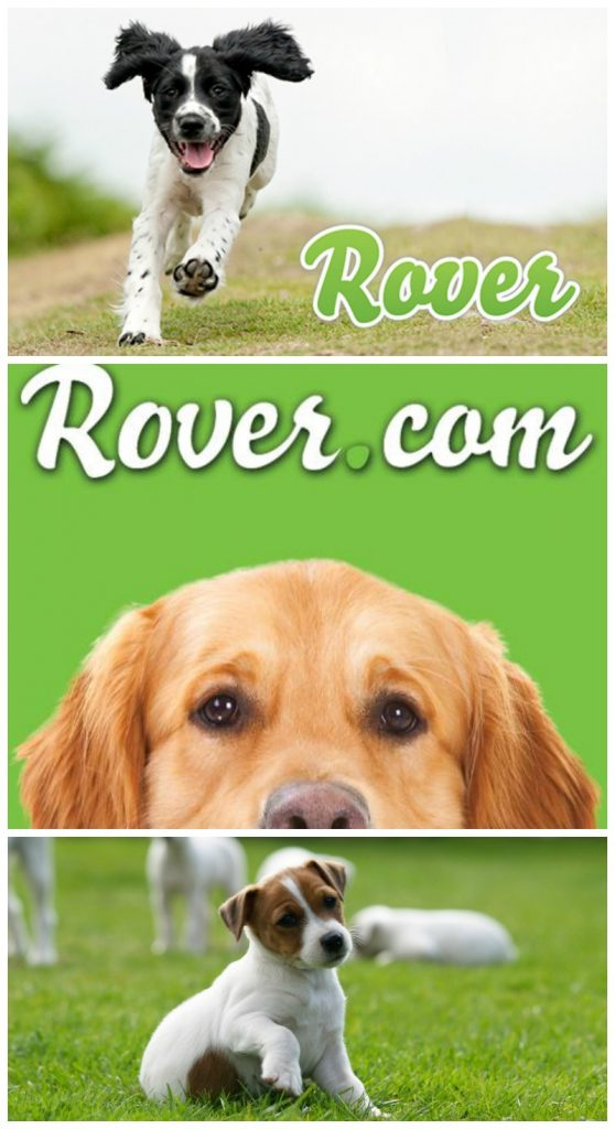 rover dog sitting job review