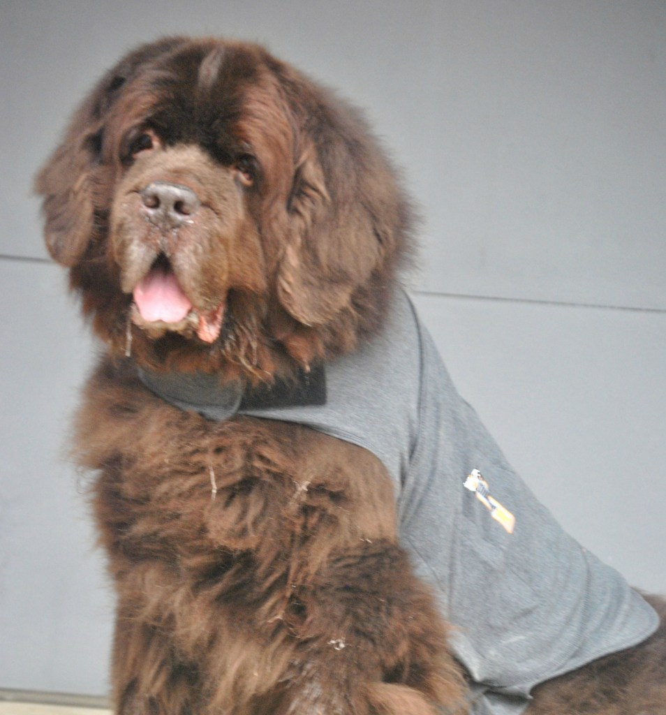thundershirt for dogs separation anxiety reviews
